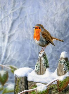 Christmas Scenes, Christmas Images, Christmas Art, Beautiful Birds, Animals Beautiful, Cute Animals, Winter Pictures, Bird Pictures, Decoupage
