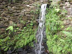 wall gardem