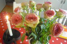 lumiukon mietteitä, viikonlopun vaaleanpunaiset ruusut