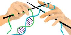 ساختار DNA یا آنچه سبب ماست چگونه است؟ فرایندهای همانندسازی DNA چگونه است؟ (بخش پایانی)
