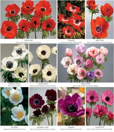 Florists' Review Magazine® :: Your monthly magazine for operating a successful floral business