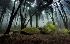 The Romantic Forest II
