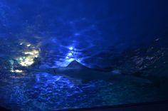 Sidney Aquarium