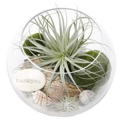 Like the mix of textures in this air plant terrarium.