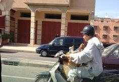 Preparing for #Eid in #Morocco
