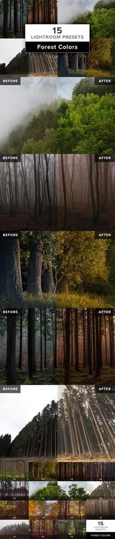 FOREST COLORS – 15 Lightroom Presets for forest scenes with different lighting situations and taken at different seasons of the year.