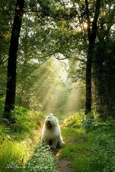 dogs are miracles with paws * explore  * by dewollewei, via Flickr
