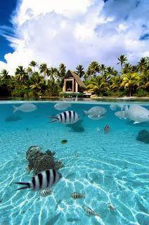 beach in Bora Bora, Polynesia