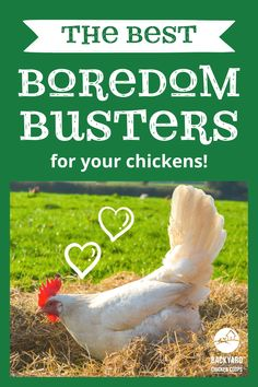 While chickens are quite creative when it comes to keeping themselves entertained - free-ranging is their forte! In the winter months, when the days are shorter and there aren't as many exciting bugs, weeds and grasses to peck at, chickens can become bored. And bored chickens are definitely not happy chickens. If you want to learn how to keep your chickens amused, try these boredom busters! Chicken Toys, Chicken Lady, Backyard Chicken Coops, Chickens Backyard, Things To Come, Good Things, Game Birds, Boredom Busters, Raising Chickens