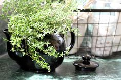 Mia Bella Passions: Thyme In A Teapot...