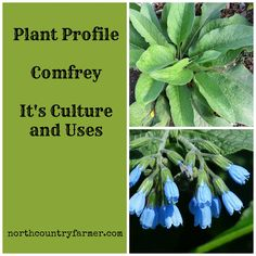 Comfrey It's Uses and Culture