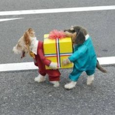 """@hughgurney's photo: """"If you own a dog, and not this suit, you are doing it wrong."""""""