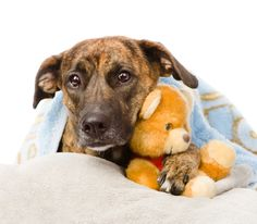 Poor sick doggies...why they URK! and home remedies for vomiting pups.