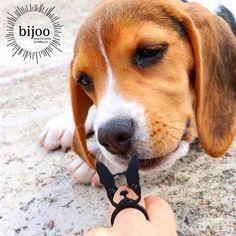 Man kann ohne Hunde leben, es lohnt sich nur nicht! Heinz Rühmann. Weich, leicht, flexibel, nachhaltig und robust! Louis Armstrong, Heinz Rühmann, Boston Terrier, Beagle, Dogs, Animals, Natural Rubber, Animal Themes, Bulldog Breeds