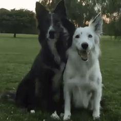 Best friends :)