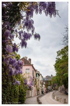 Wisteria-lined street in Montmartre, Paris