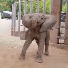 Baby Ella @ the Elephant Rescue Camp ☺️🐘💗 . Save the Elephants! Funny Animal Videos, Cute Funny Animals, Cute Baby Animals, Animals And Pets, Nature Animals, Wild Animals, Save The Elephants, Tier Fotos, Cute Kittens