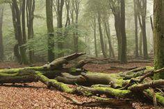 Gortelse Bos, Veluwe, Nethewrlands