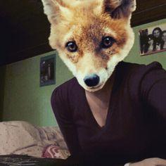 Hi, what's up?  #fox #animals #animalface #foxface
