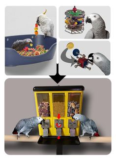 Money foraging enrichment concept for intelligent animals, example large parrots, corvids and primates. Tokens or coins are hidden in toys and in the enclosure. Coins can be used to buy treats or favourite toys from a vending machine.