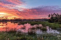 Early this morning at Orlando Wetlands in central Florida [OC] [1280x854]   landscape Nature Photos