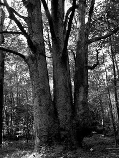triple tree in south mountain reservation South Orange, My Photos, Mountain, Mountaineering