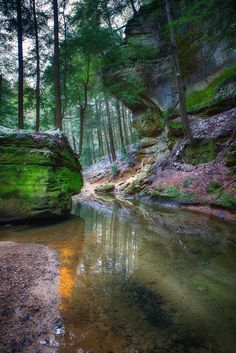Sanctuary - Woodland trail from Cedar Falls to Old Man's Cave in Hocking Hills State Park Ohio by Jim Crotty