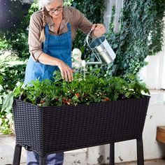 Keter 212157 Easy Grow Elevated Garden Bed. This on sale at Sams Club for $88. Love this!