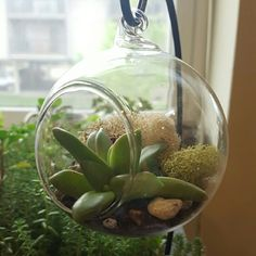 Marshcat Sedum Globe (Set of 3) This is a personal listing.   1. Care sheet and instruction sheet 2. 3 3.15 in Mini Glass Globes 3. 6 Sedum Buds (may vary, but will show before shipping) 4. Moss 5. Pebbles 6. Soil  Listed as FP for exposure.  https://www.etsy.com/listing/266947508/set-of-3-sedum-globes-without-stand Free People Accessories