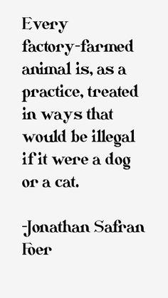 #vegan #veganism #govegan #goveg #animalrights Vegan Facts, Vegan Memes, Vegan Quotes, How To Become Vegan, How To Find Out, Reasons To Be Vegan, Why Vegan, Stop Animal Cruelty, Vegan Animals