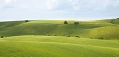 GREEN. Countryside. At Brorfelde in Holbæk Municipality on island of Zealand - Denmark.  #Landscapes #Views #Photographies