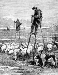 Shepherds on stilts. Victorian illustration of a shepherd and his wife from the sandy, marshy Landes in the south of France tending their sheep standing on stilts. The shepherd knits as his flock grazes and his sheepdog watches over them. Download high quality jpeg for just £5. Perfect for framing, logos, letterheads, and greetings cards.