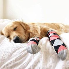 In his Happy Socks-LOL