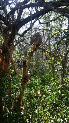 Comejen en Wildlife Refuge Cabo Rojo