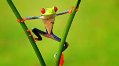 Frog Hanging On The Branches
