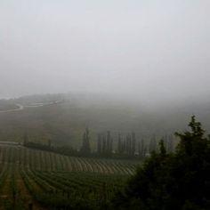 The rain is coming. Ellanaphotography