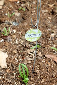 Add useful decorations to your garden with these fun plant marker stakes! All you need is some pebbles, pens, and mod-podge!