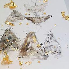 Susan Davies Prints (@susandaviesprints) • Instagram photos and videos Insects, Photo And Video, Nature Inspired, Prints, Animals, Instagram, Videos, Photos, Art