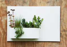 20 x 30 Modern White Metal Succulent Wall Decor & by UrbanMettle