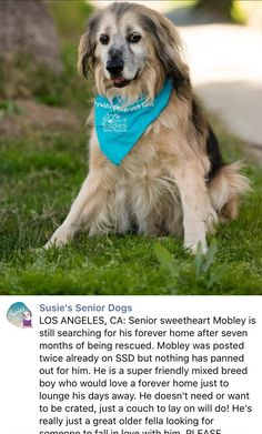 3/18/17 MOBLEY IS STILL WAITING! THIS IS SO SAD! PLEASE SHARE HIM TO GET HIS FOREVER❤️ /ij https://m.facebook.com/susiesseniordogs/photos/a.272358689587441.1073741828.272349689588341/807365216086783/?type=3&source=48&__tn__=E
