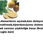 limon_maydanoz_resmi_1238871992