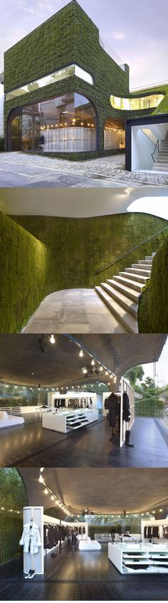 Glass wall with climbing plant on outer. Ann Demeulemeester Shop by Mass Studies, Seoul.