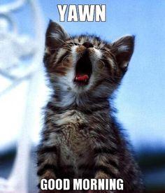 Yawn - Good Morning