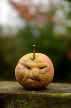 Just an interesting face on some kind of fruit that could be used as a puppet idea Weird Fruit, Funny Fruit, Strange Fruit, Funny Vegetables, Fruits And Vegetables, Things With Faces, Crazy Faces, Weird Plants, Weird Shapes