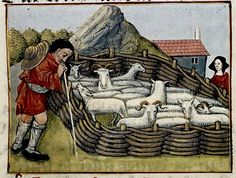 Sheep in Pen. French 15th century MS Douce
