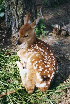 Raised a baby deer! Bottle fed him!