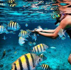 Snorkelling looks like so so much fun ?Snorkelling looks like so so much fun ?