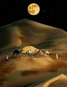 Moon in the desert - Anna Coombs Hmr Deserts Of The World, Desert Life, Moon Pictures, Maps Street View, Good Night Moon, Beautiful Moon, Moon Art, Amazing Nature, Belle Photo