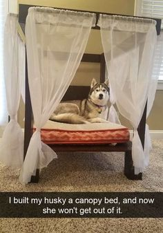 We're not saying Huskies are the best dog. We're just providing a bunch of cute and funny data and letting you decide. [via ebaumsworld]