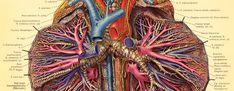 anatomy - Google Search